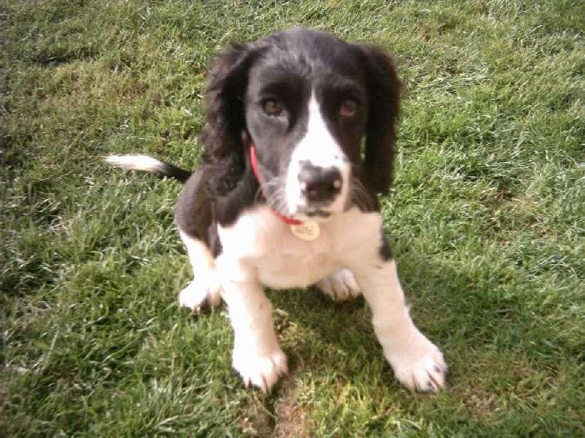 Molly Puppy