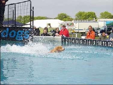 dog_splash_470_470x352.jpg