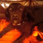 Maisy Moo